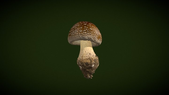 Real fungus scan 3D - Amanita excelsa 3D Model