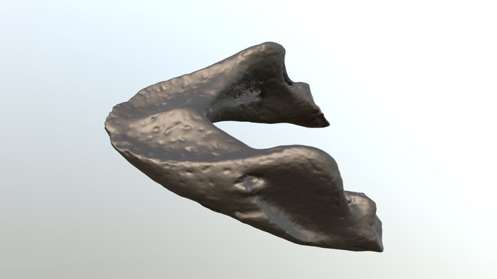 Procolpochelys sea turtle jaw CCNHM 893 3D Model