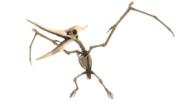 Pteranodon Skeleton 3D Model
