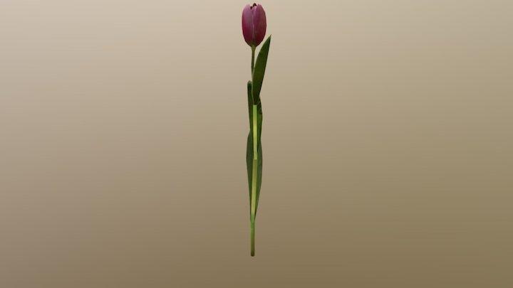 Tulp 3D Model