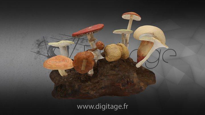 Petite Forêt de Champignon 3D Model