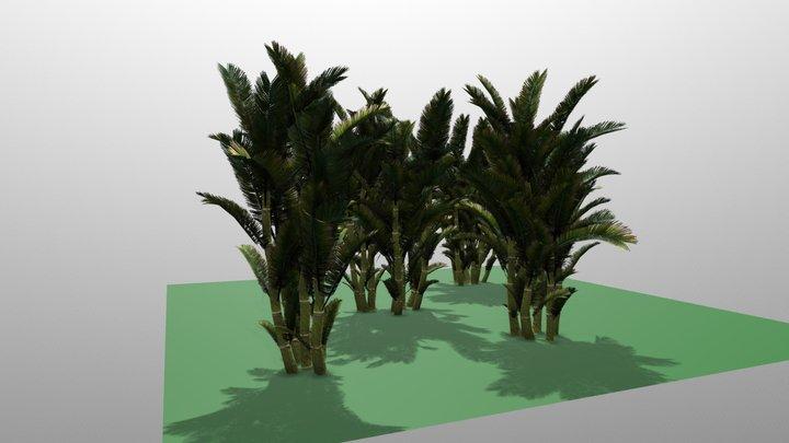 Bactris Major 3D Model