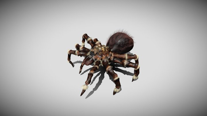 Furry Spider with animations 3D Model