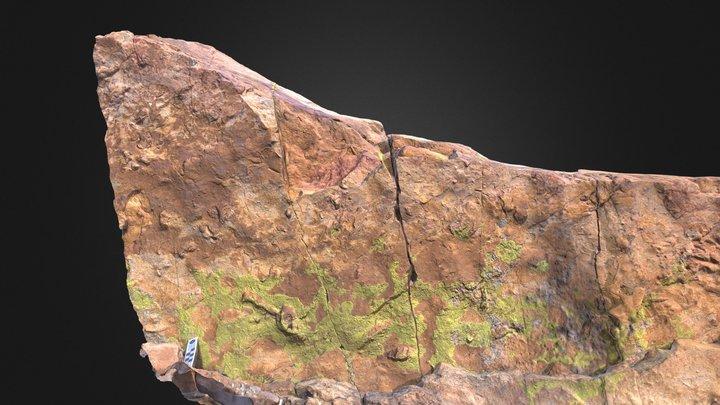 Cretaceous Turtle Track 3D Model