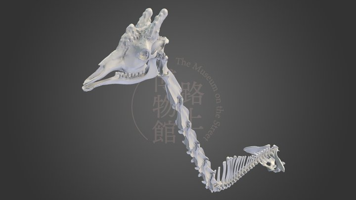キリン頸椎 Giraffe (NSMT-M34482)  Skull and Vertebrae 3D Model