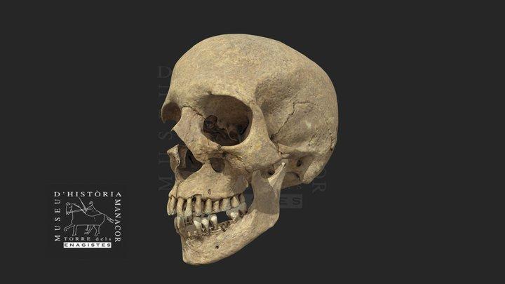 Crani 3D Model
