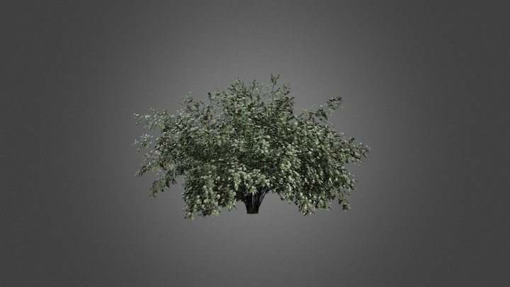 Biancospino 3D Model