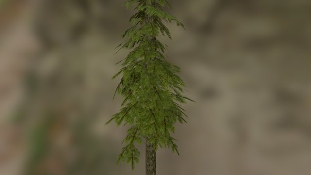 The Forest Exchange - PineTree 3D Model