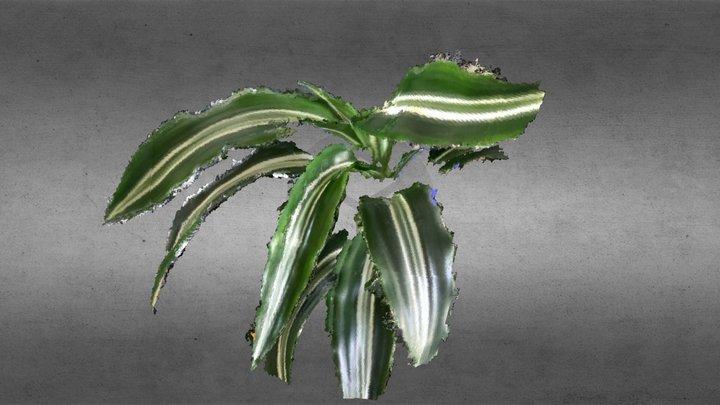 House Plant Leaves - 0.5mm 3D Model
