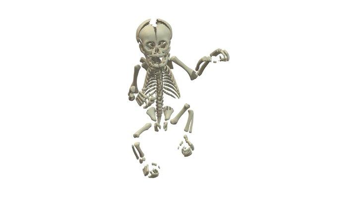 Orangutan Neonate Skeleton 3D Model