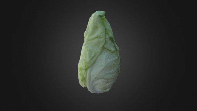 Col Picuda 3D Model