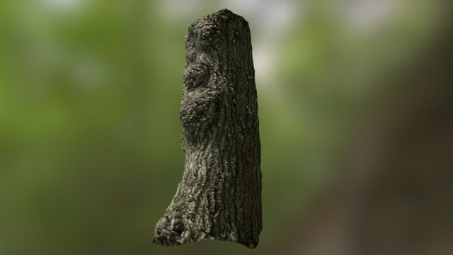 Hatfield  Tree Bark Photogrammetry 3D Model