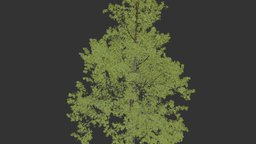 Tree - Tall Green Flame_outline 3D Model