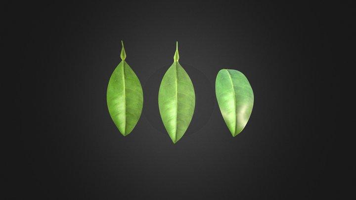 Lemon Leaf 3D Model