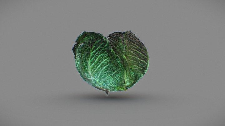 Cabbage 3D Model
