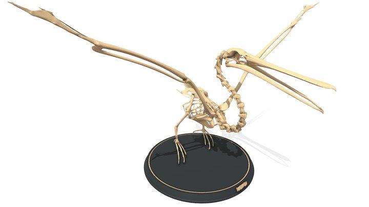 Pelican Skeleton 3D Model