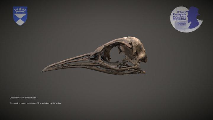 Penguin skull 3D Model