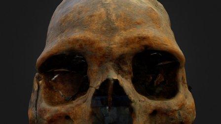Skull test 3D Model