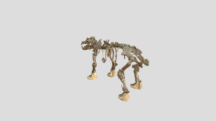 Hippopotamus antiquus_IGF 1043_skeleton 3D Model