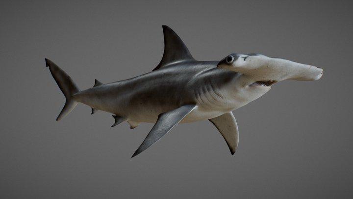 hammerhead shark (Sphyrna mokarran) 3D Model