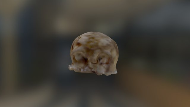 Skull, Holmul, Building A, Group II 3D Model