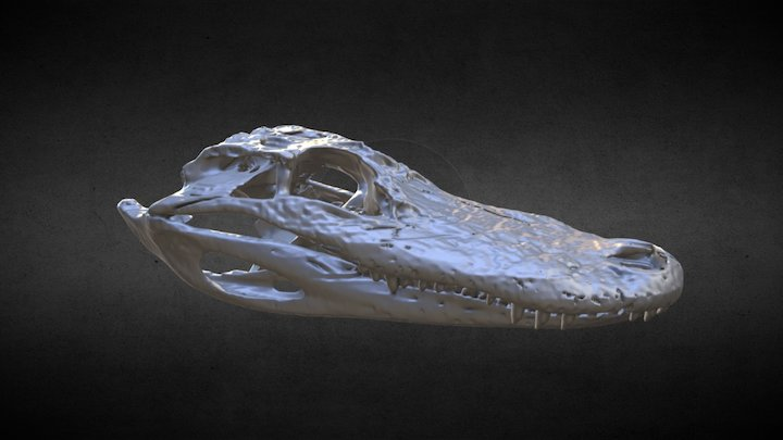 Alligator mississippiensis 3D Model