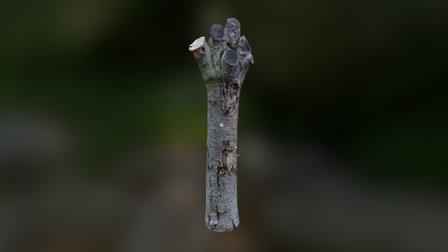 Stump from Rivne 3D Model