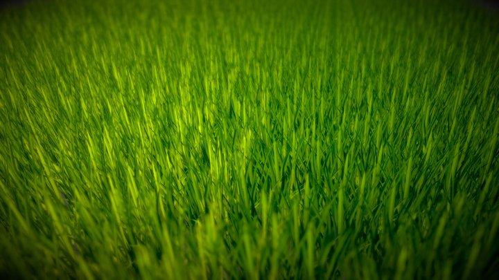 Green Field 3D Model