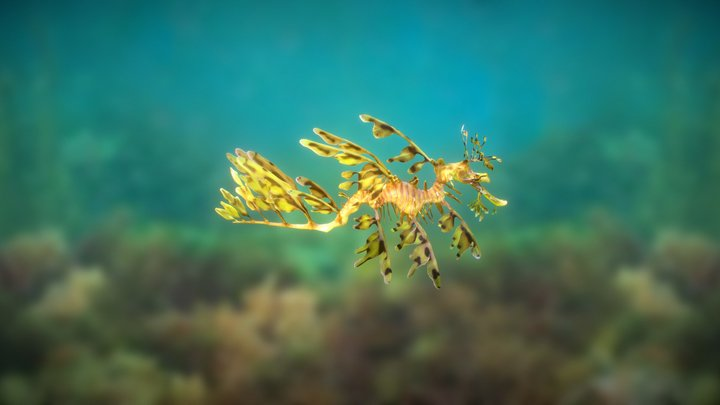 Leafy Sea Dragon created with Smoothie-3D 3D Model