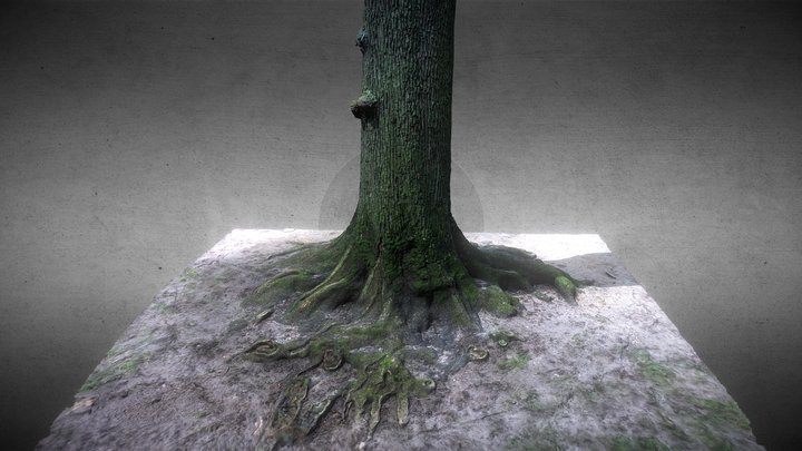 Tree 01 3D Model