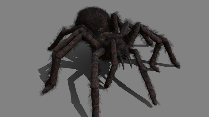 Spider - Tarantula with animations 3D Model