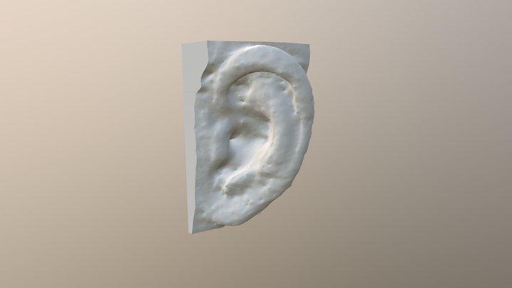 耳 / Ear 3D Model
