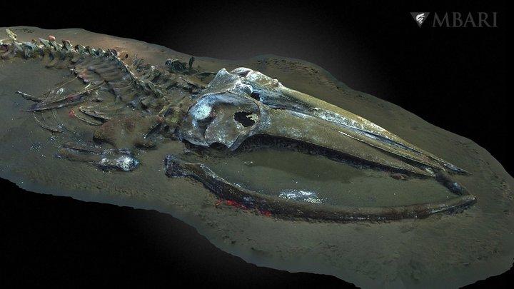 Rosebud Whale Fall 3D Model