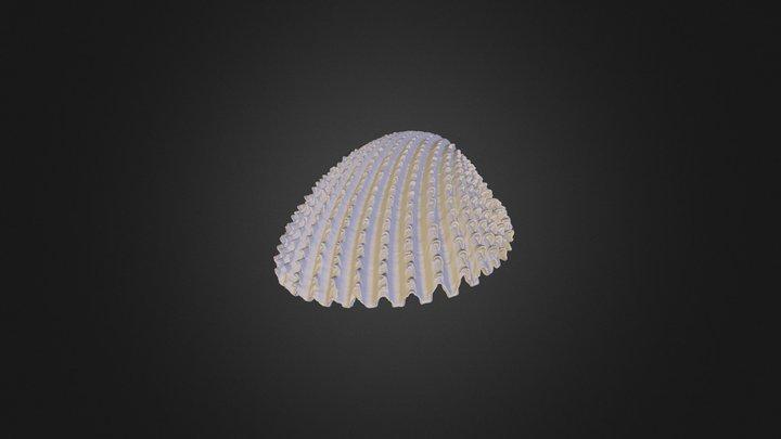 Shell - MircoCT 3D Model