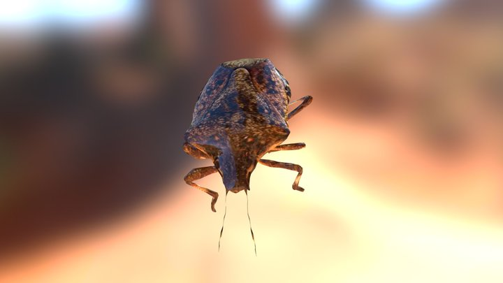 Brown Marmorated Stink bug 3D Model