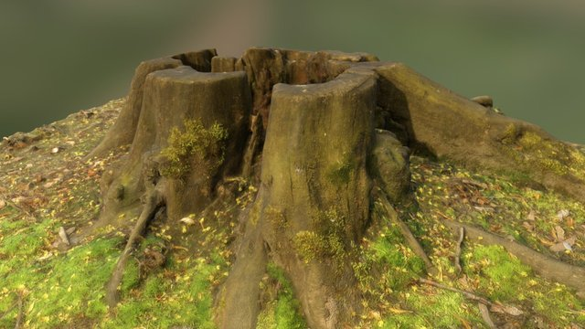 stump_05 3D Model