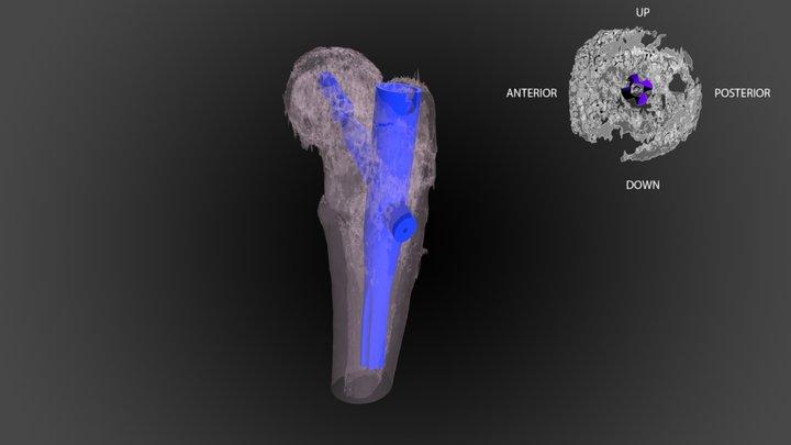 CENTRO 3D Model