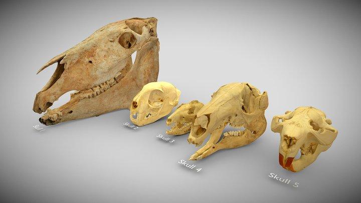 Skull Parade Set 1 3D Model