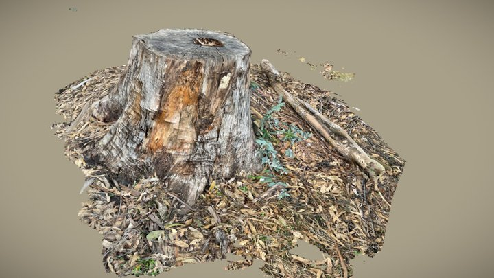 Scan of eucalyptus tree stump and leaves 3D Model