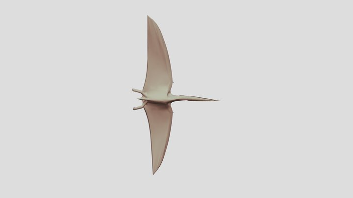 Geosternbergia Pterosaur 3D Model