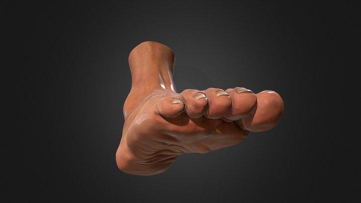 Foot anatomy 3D Model