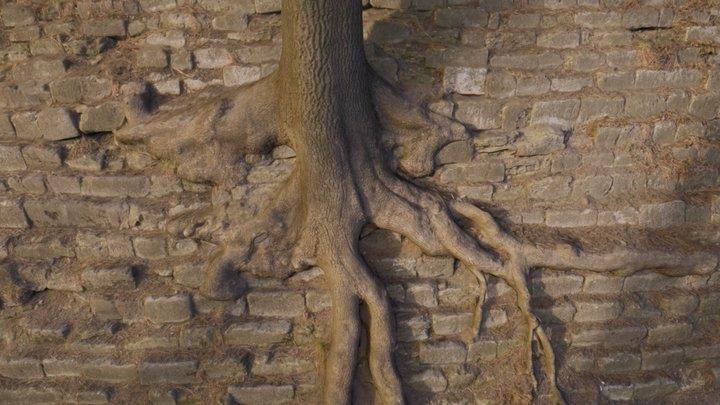 Lviv Tree On Hill 3D Model