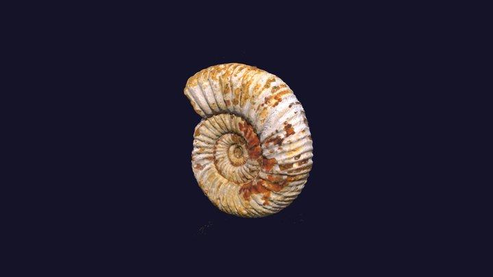 Ammonite Model 3D Model