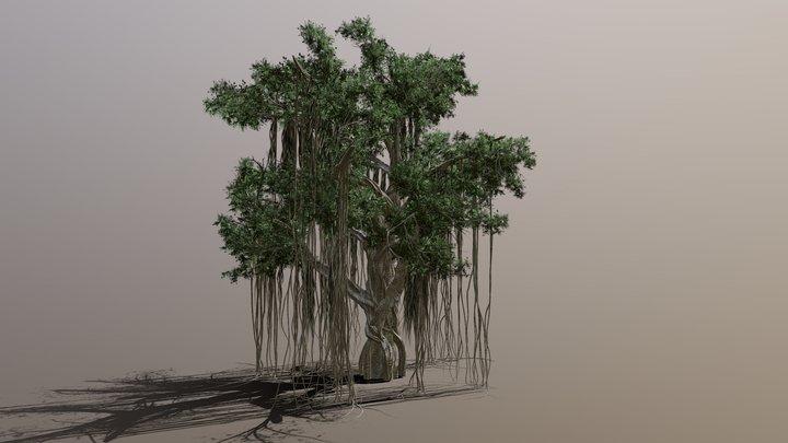 Chinese Banyan Tree - Medium Poly 3D Model