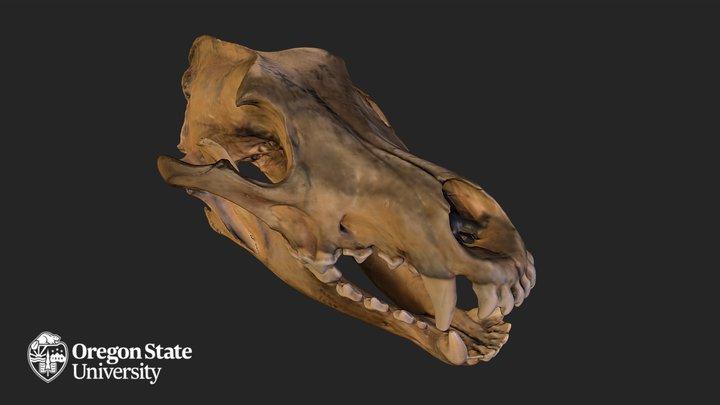 Wolf Skull - FW2415 3D Model