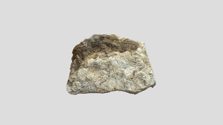 Fossil - Sedimentary Rock 3D Model