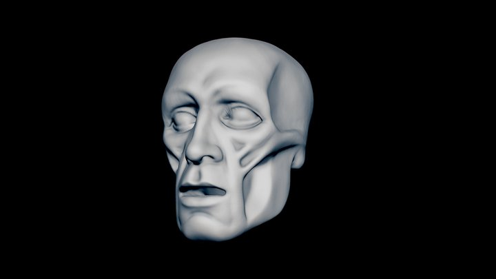 ECORCHÈ HEAD STUDY 3D Model