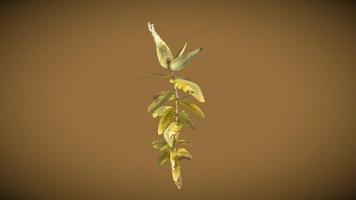 Milkweed 3D Model