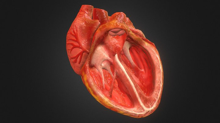 3d Animated Realistic Human Heart - V2.0 3D Model
