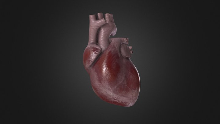 Animated Human Heart 3D Model